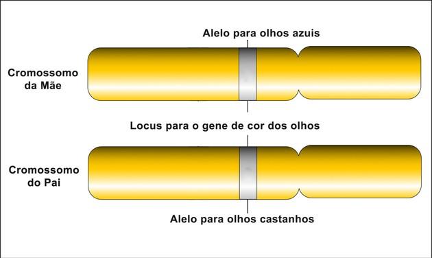 Gene e Alelo