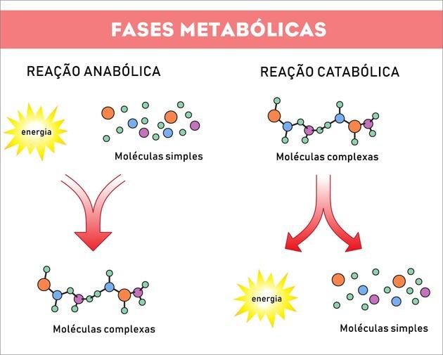 Processos anabólicos e catabólicos