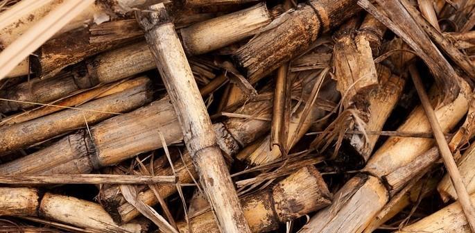 Biomassa de Cana