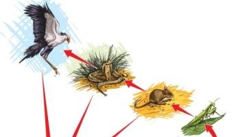 Cadeia alimentar e teia alimentar