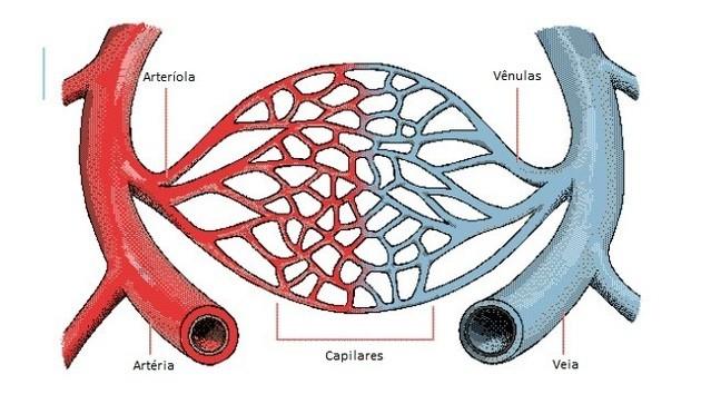 Explicação de um vaso capilar