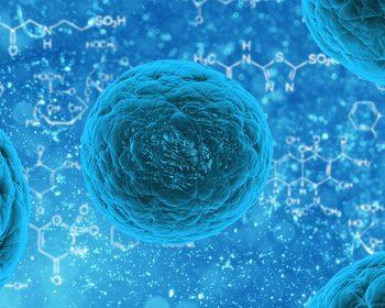 Células procariontes e células eucariontes