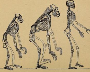 Criacionismo e evolucionismo