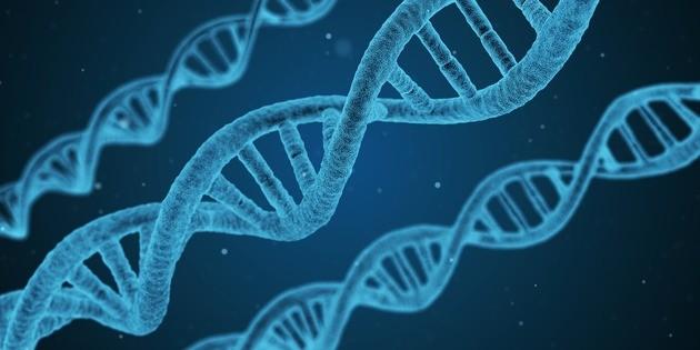 DNA / ADN