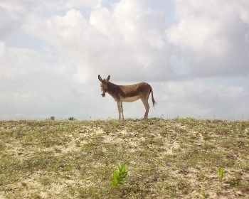 Asno, jumento, jegue, burro, mula e bardoto
