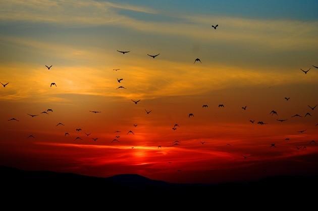Pôr do Sol ou Nascer do Sol / Período matutino ou vespertino