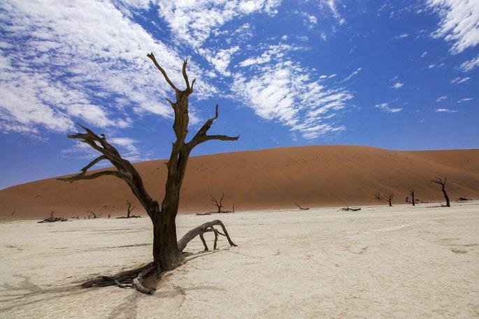 solo arenoso com uma árvore seca