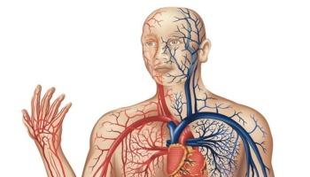 Veia, artéria e capilar